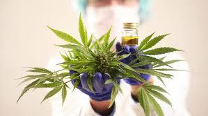 Kannabisaiheisia oikeustapauksia